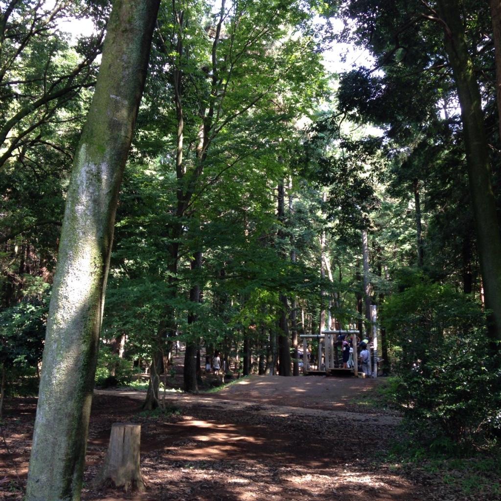 え!柏市に森があるの?涼を求めるなら手賀の丘公園に行こう!じゃぶじゃぶ池もレベルが高い。