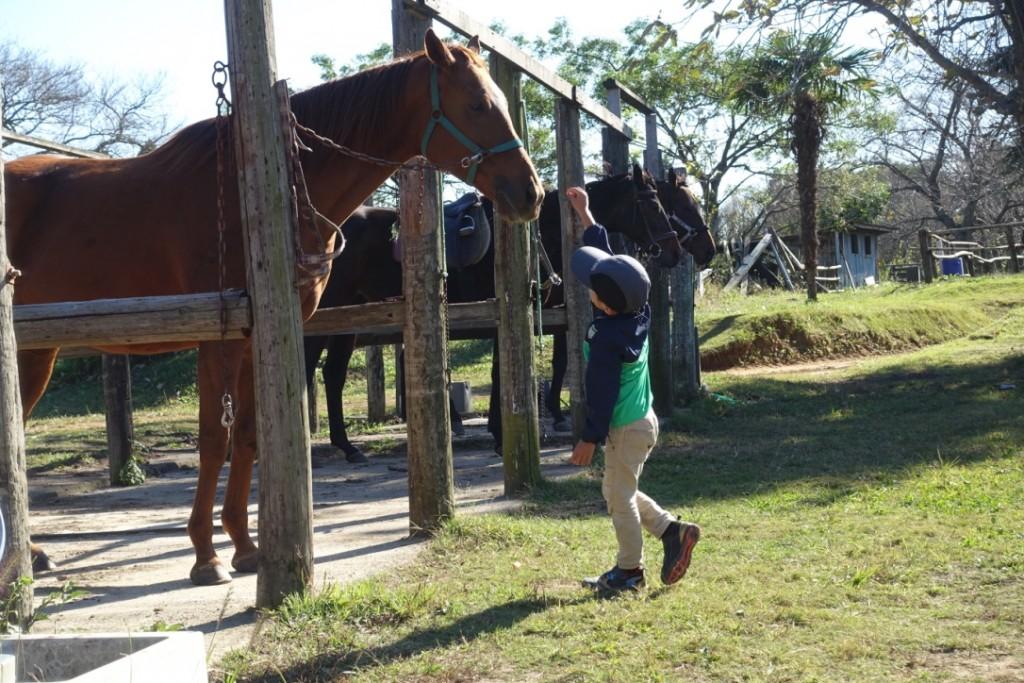 初めての乗馬練習、師匠から教わったこと。